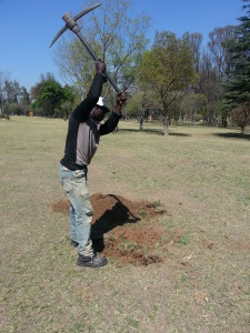 Digging the compact soil to plant trees on Spruit Day